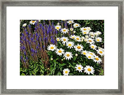 White Daisies Framed Print by Aimee L Maher Photography and Art Visit ALMGallerydotcom