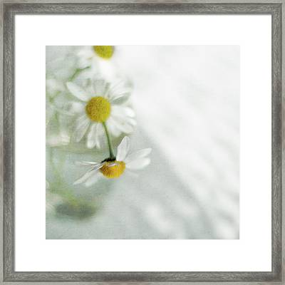White Daisies Framed Print by Jill Ferry
