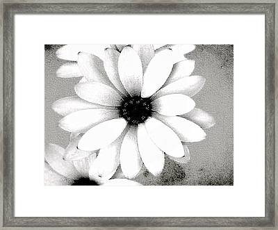 Framed Print featuring the photograph White Daisy by Tammy Espino