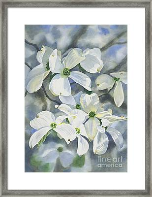White Dogwood Framed Print by Sharon Freeman