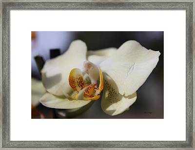 White Dove Orchid Framed Print