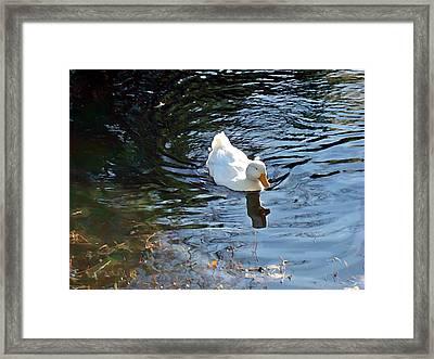 White Duck Framed Print