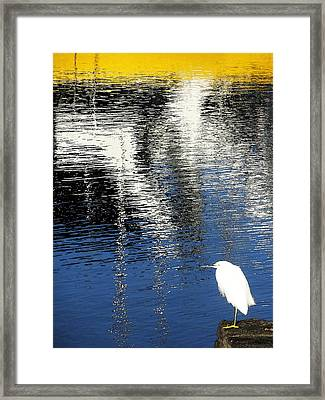 White Egret On Dock With Colorful Reflections Framed Print by Anne Mott