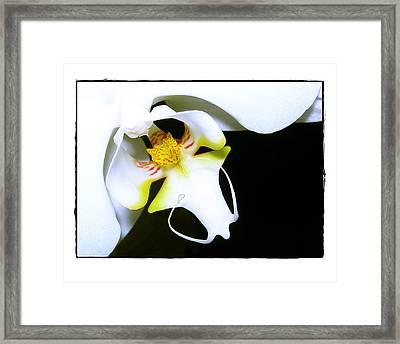 White Elegance Framed Print by Judi Bagwell
