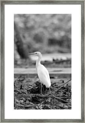 White  Framed Print by Elizabeth  Doran