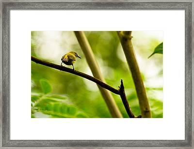 Framed Print featuring the photograph White-eye by Justin Albrecht