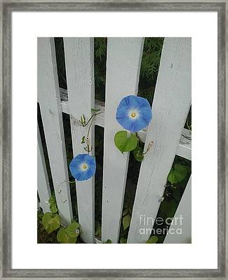 White Fence Framed Print