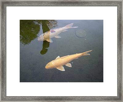 White Fish Yellow Fish Framed Print by Val Oconnor