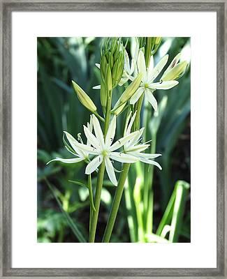 White Floral Framed Print by Rebecca Overton
