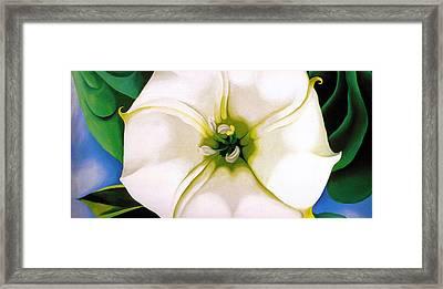 White Flower 9 Framed Print by Sumit Mehndiratta