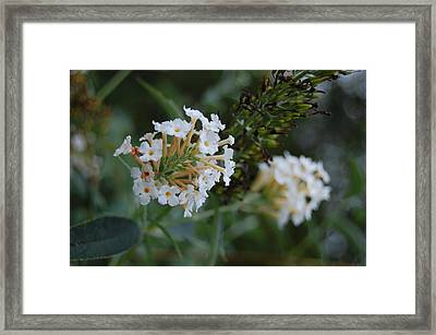 White Flower Framed Print by Beverly Hammond