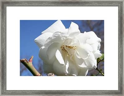 White Flower Framed Print by Eduardo Bouzas