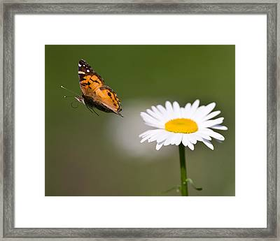 White Flower Framed Print by Jody Trappe Photography
