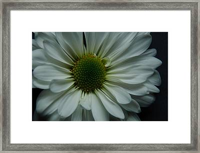 White Flower Framed Print by Ron Smith
