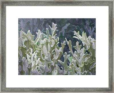 White Forest 7 Framed Print by Michael Taggart II