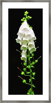 Framed Print featuring the photograph White Foxglove by Albert Seger