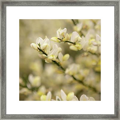 White Fragrant Flower Close Up Framed Print by by Samia Mohammed