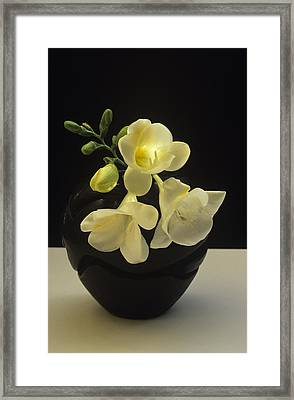 White Freesias In Black Vase Framed Print