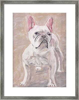 White Frenchie Framed Print