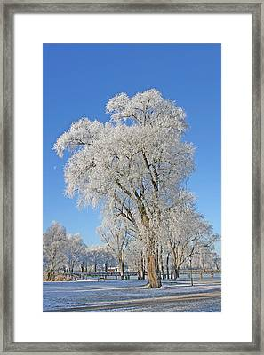 White Frost Tree Framed Print by Ralf Kaiser