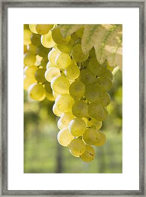 White Grapes Framed Print by Michael Interisano