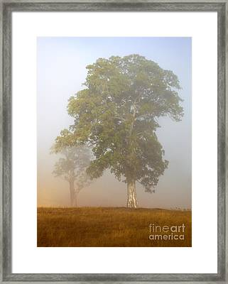 White Gum Dawn Framed Print by Mike  Dawson