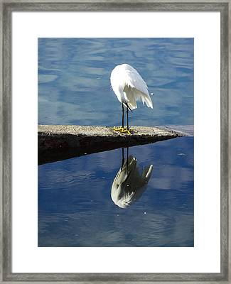 White Heron Framed Print by Anne Mott