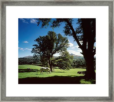 White Horse At Powerscourt, Co Wicklow Framed Print by The Irish Image Collection