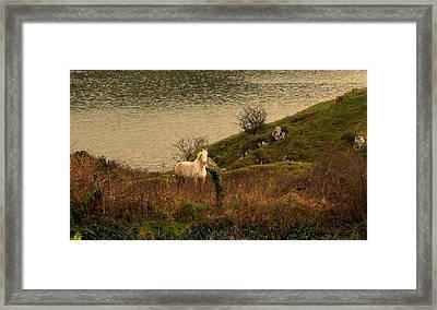 White Horse Framed Print by Barbara Walsh