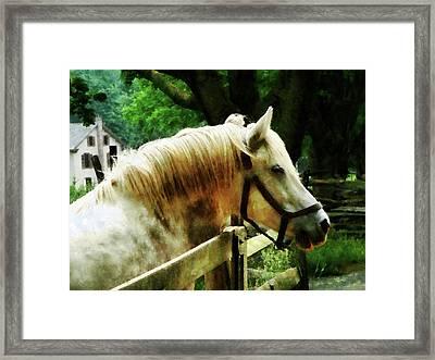 White Horse Closeup Framed Print by Susan Savad