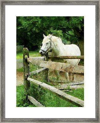 White Horse In Paddock Framed Print by Susan Savad
