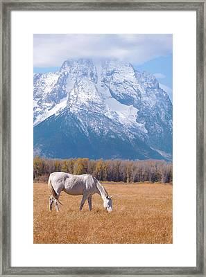 White Horse In Teton National Park Wy Usa Framed Print by Chasing Light Photography Thomas Vela
