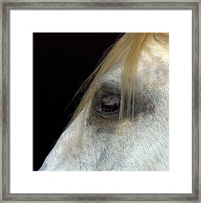 White Horse Framed Print by Marmimuralla