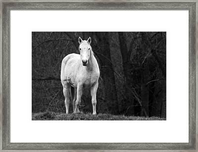 White Horse Framed Print by Steve Parr