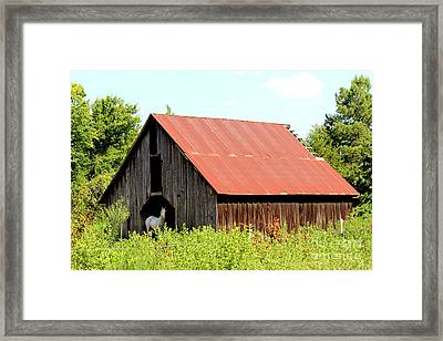 Framed Print featuring the photograph White Horse Waiting by Kathy  White