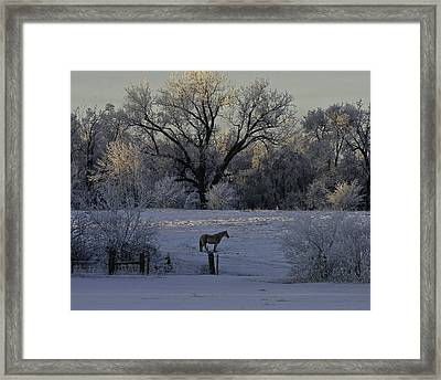 White Horse Winter Framed Print by Kenneth McElroy