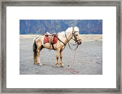 White Horse Framed Print by Yew Kwang