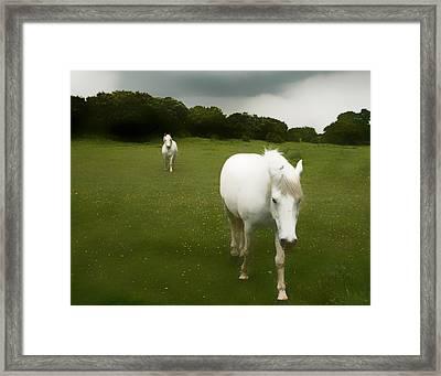 White Horses Framed Print by Jim Painter