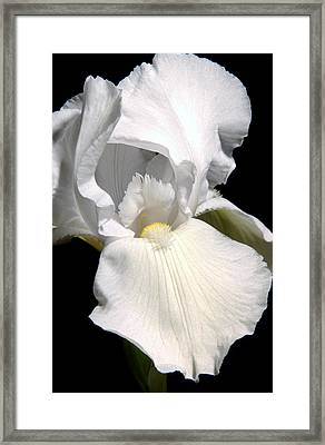 White Iris Framed Print