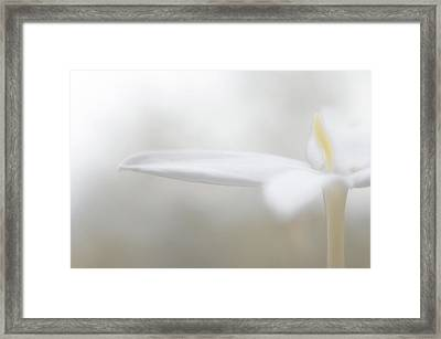 White Jasmine Detail Framed Print