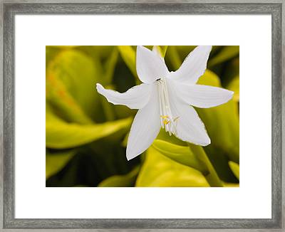 Framed Print featuring the photograph White by Josef Pittner