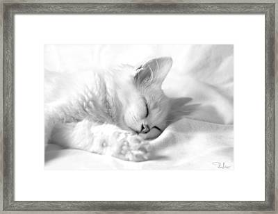 Framed Print featuring the photograph White Kitten On White. by Raffaella Lunelli