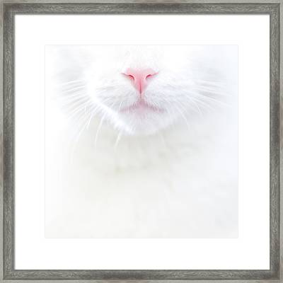 White Kitty Cat With Pink Nose Framed Print by TC Morgan Photography