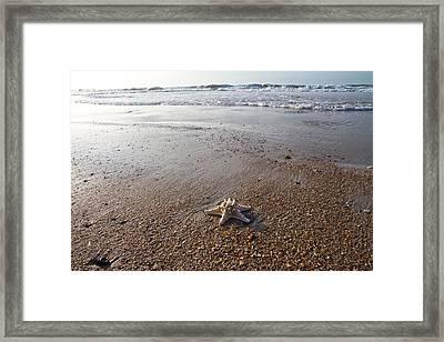 White Knobby Seastar Framed Print by Betsy Knapp