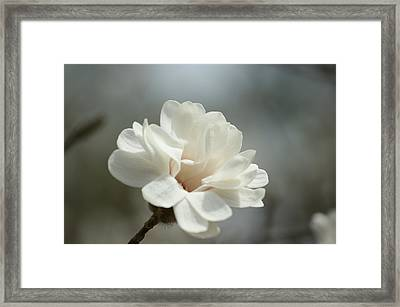 White Light Framed Print by GuitarGeeks Photography