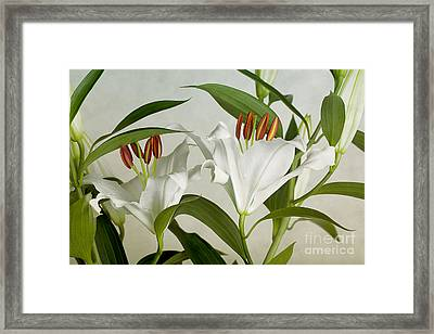 White Lilies Framed Print by Nailia Schwarz