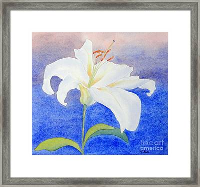 White Lily Framed Print