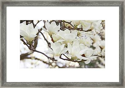 White Magnolias Framed Print by Becky Lodes