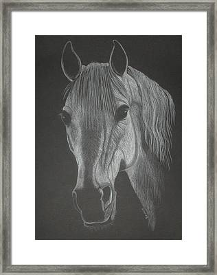 White Mare Framed Print by Stephanie L Carr