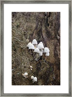 White Mini Mushrooms Framed Print by Koral Garcia